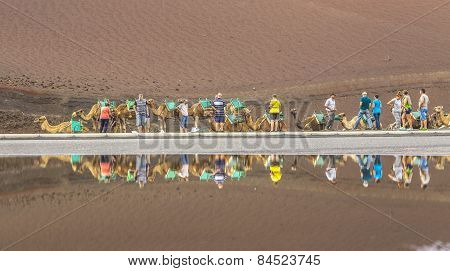 Caravan Of Camels With Tourists In Timanfaya National Park