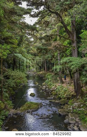 A view of Whangarei forest nature reserve and river