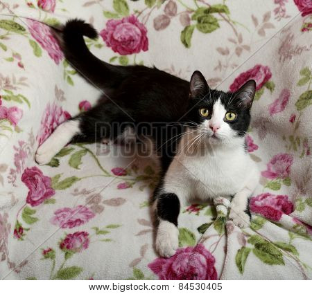 Black And White Cat Lying In Chair