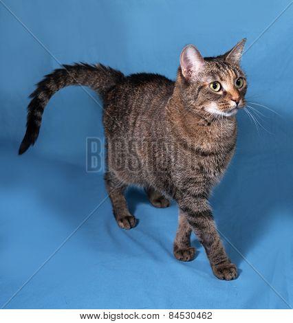Tabby Cat Going On Blue