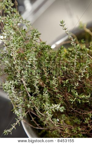 Thyme in colander