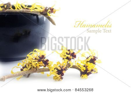 Witch Hazel  And Cream Pot Isolated On White Background