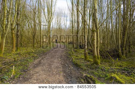Footpath through a forest in winter