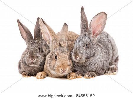 Rabbits sitting together