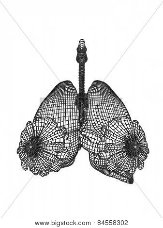 Concept conceptual anatomical human woman 3D wireframe mesh respiratory system  with lungs breasts isolated on white background, for anatomy, medical, body, biology, health, care, mammary or pulmonary