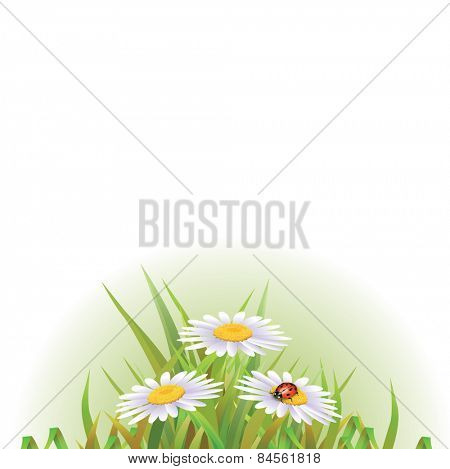 Beautyful camomiles design. Vector of summer background with gradient and radiance.