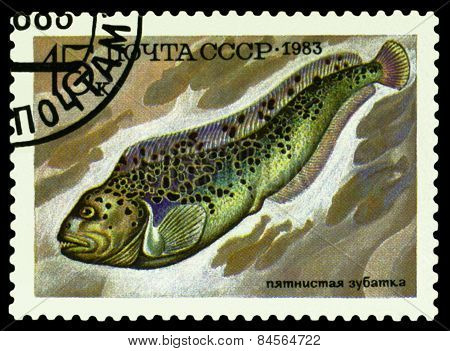 Vintage  Postage Stamp. Fish Anarhichas Minor.