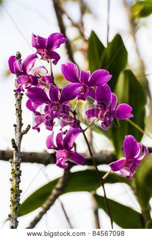 Purple Orchid In Garden