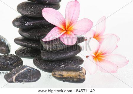 Plumeria Flowers And Black Stones Close-up