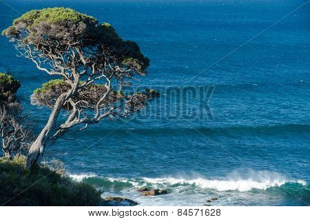 Cliff Top Tree