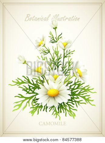 Flower vector illustration