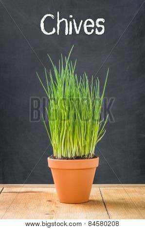 Chives In A Clay Pot On A Dark Background
