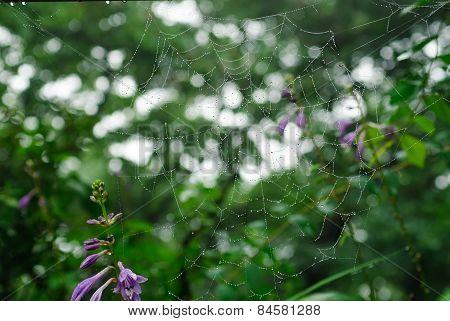 Closeup Of Spider Web