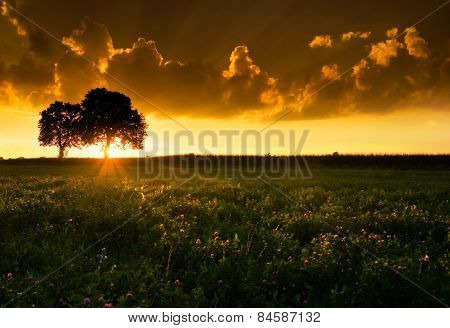 Trees And Sunset On Field