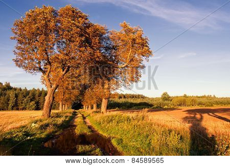 Chestnut Trees In Landscape