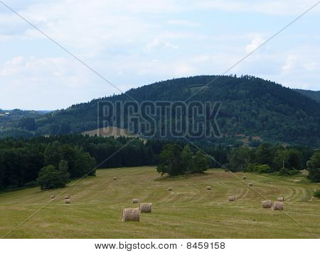 farmland, field