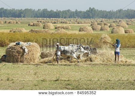 Agriculture, Ethiopia, Africa