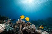 stock photo of amaze  - Amazing Underwater nice fish swimming in ocean - JPG