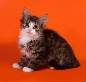 stock photo of orange kitten  - Striped and white fluffy kitten sitting on orange background - JPG