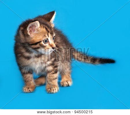 Little Tabby Kitten Standing On Blue