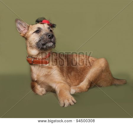 Red Puppy In Red Hat Lying On Green