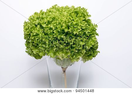 lettuce pictured as a flower