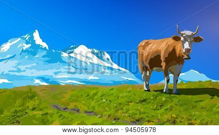 Cow on high meadow on snow mountains background.