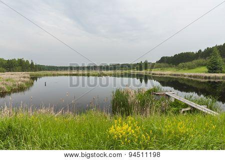 Pond Scenic