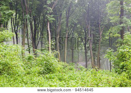Rainy Forest Scenery
