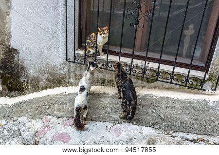 Three Cats In Kotor City, Montenegro