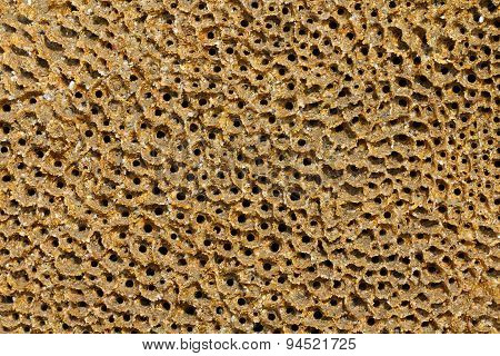 Honeycomb worm holes