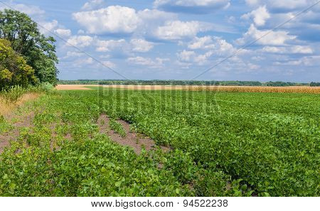 Ukrainian agricultural landscape - field with soybean
