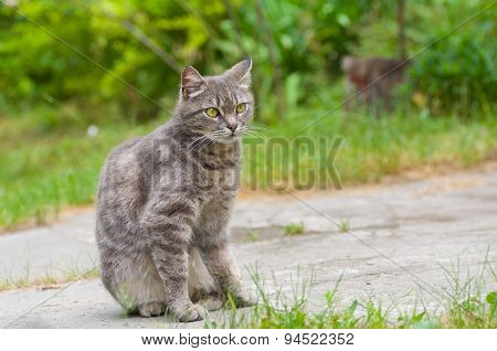 Outdoor portrait of guarded tabby cat