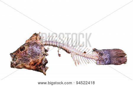 Close Up Nile Tilapia Fishbone After Meal Isolated On White  Background With Clipping Path