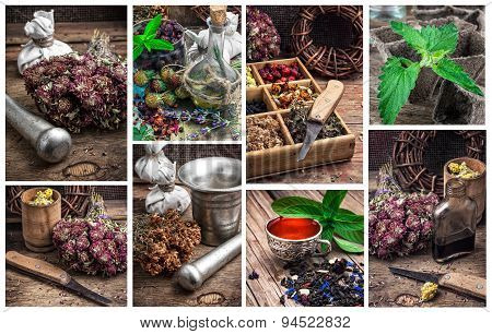 collage with the collected harvest medicinal herbs for medicinal