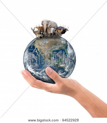 Hand Hold Animal On The Earth