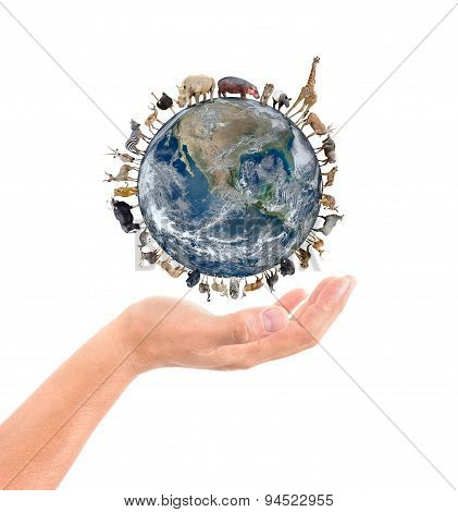 Animal Stand Around The World On The Hand
