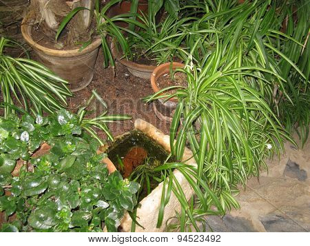 A small street garden