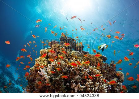 Coral reef with fishes around with clear blue water on the background