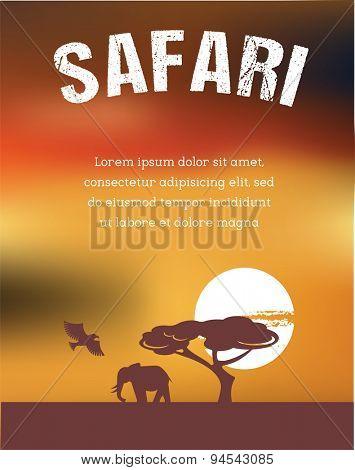 Africa and Safari poster design