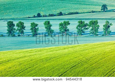 Moravian rolling landscape with row of  trees in morning. Moravia, Czech Republic. soft focus.