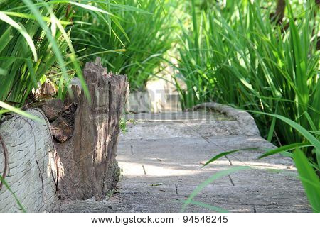 Walk Way Green In Resort Texture Timber