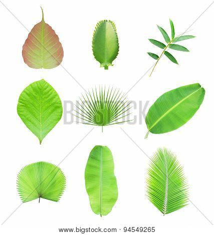 Collection of green leaf