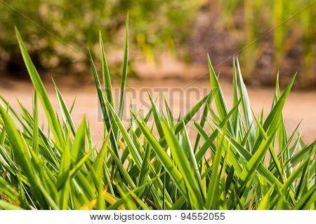 closeup macro view of wild grass growth in a farmland