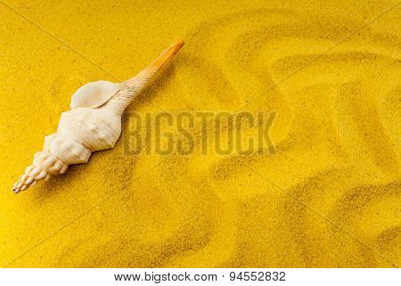 Shell On The Yellow Sand