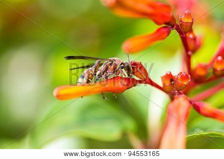 Hymenoptera On Orange Flower