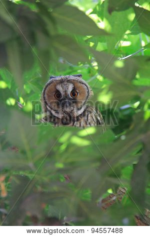 Owl On Green Tree