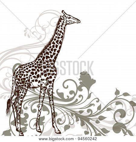 Detailed Giraffe Animal In Engraved Style