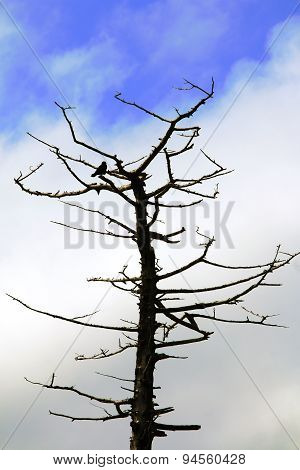 the system tree on blue sky background