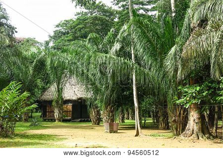 Tropical Jungle House In Bolivia.